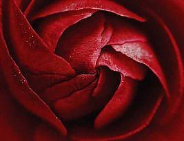 نامههای من و پول (قسمت ۳۷): افسون گل سرخ